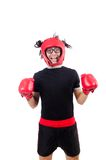 Funny boxer isolated on the white Royalty Free Stock Photos