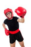 Funny boxer isolated on the white Royalty Free Stock Photo