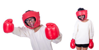 The funny boxer isolated on white Stock Images