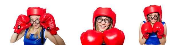 The funny boxer isolated on white Stock Photography