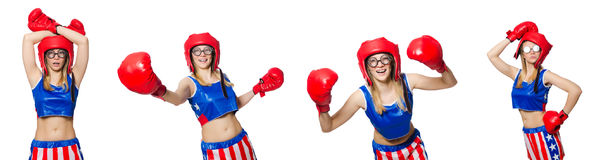 The funny boxer isolated on white Stock Photo
