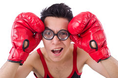 Funny boxer Stock Image