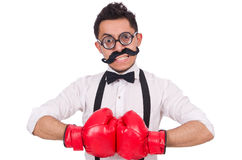 Funny boxer Royalty Free Stock Photos