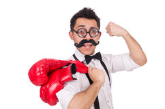 Funny boxer isolated on the white background Stock Photography
