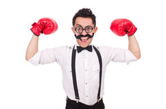 Funny boxer isolated on the white background Stock Image