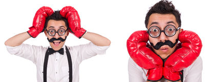 The funny boxer isolated on the white background Stock Photography