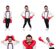 The funny boxer isolated on the white background Stock Image