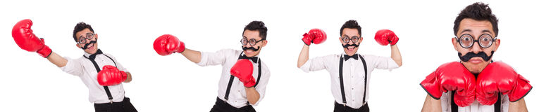 The funny boxer isolated on the white background Royalty Free Stock Photos