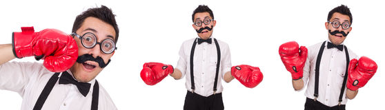 The funny boxer isolated on the white background Royalty Free Stock Image