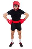 Funny boxer. On the white Stock Photography