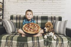 Funny boy and dog beagle eating pizza. On the sofa in the room Stock Photos