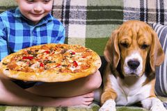 Funny boy and dog beagle eating pizza. On the sofa in the room Royalty Free Stock Photography