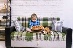 Funny boy and dog beagle eating pizza. On the sofa in the room Royalty Free Stock Images
