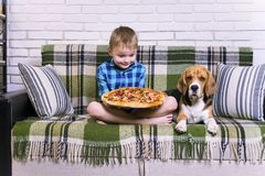 Funny boy and dog beagle eating pizza. On the sofa in the room Royalty Free Stock Image