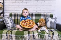 Funny boy and dog beagle eating pizza. On the sofa in the room Stock Photography