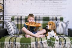 Funny boy and dog beagle eating pizza. On the sofa in the room Royalty Free Stock Photos