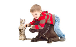 Funny boy, dog and kitten. Funny game boy, a dog and a kitten Royalty Free Stock Photos