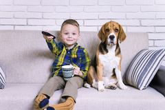 Boy with remote control watching TV with dog royalty free stock images