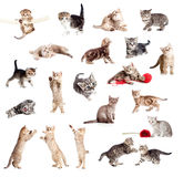 Funny British kittens collection Stock Photography