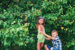 Funny brother and sister at the tree with ripe apricots . Funny brother and sister at the tree with apricots .  Children in the orchard. Walks in the fresh air stock photography