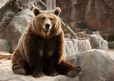 Funny brown bear Stock Photo