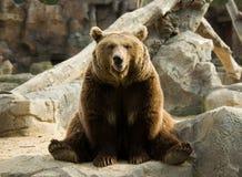 Funny brown bear