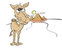Funny Brown Camel, illustration. Funny Brown Camel, in the Sunny Egyptian Desert and Pyramids, illustration vector illustration