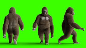 Funny brown gorilla walking. Super realistic fur and hair. Green screen. 3d rendering. vector illustration