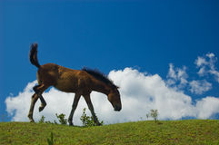 Funny brown horse Royalty Free Stock Photo