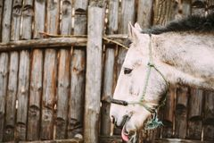 Funny Brown Horse Close Up Head Royalty Free Stock Photo