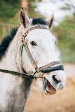 Funny Brown Horse Close Up Head Stock Photos