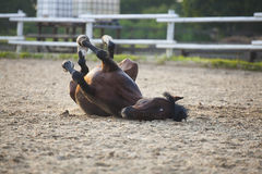 Funny brown horse Stock Photos