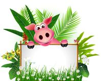 Funny brown pig with blank sign Stock Photo