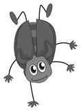 Funny Bug Royalty Free Stock Images