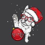 Funny bulldog with glasses and hat, with a christmas ball. New Year`s and Christmas. Royalty Free Stock Photo