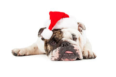 Funny Bulldog Santa Laying Down Royalty Free Stock Photography