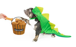 Funny Bulldog Trick or Treating stock photography