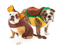 Funny Bulldogs in Halloween Costumes Royalty Free Stock Photography