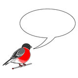 A funny bullfinch with a chatting bubble Stock Images