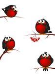 Funny bullfinches. On rowan branches Vector Illustration