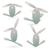 Funny bunnies Royalty Free Stock Photo