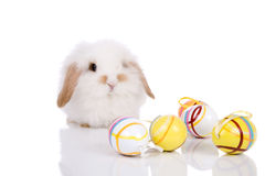 Funny bunny Royalty Free Stock Photography