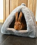 Funny bunny in bed. A French Fauve de Bourgogne rabbit peeking out from a plush bunny bed. Perfect meme. Copy space stock images