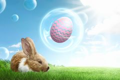 Funny bunny with eggs on flying bubbles Stock Photos