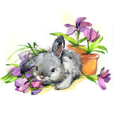 Funny bunny and flowers illustration. watercolor drawing. Stock Photo