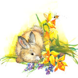 Funny bunny illustration. watercolor drawing. Stock Photography