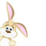 Funny bunny Stock Image