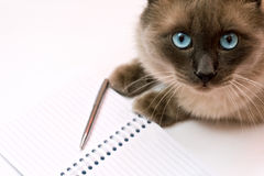 Funny business concept - cat pen and blank notepad Royalty Free Stock Photography