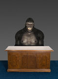 Funny Business Gorilla Office Desk Royalty Free Stock Photography