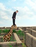 Funny Businessman, Sales, Goals, Marketing. A businessman stands on a giraffe in a maze looking for answers to problems, questions, and solutions. Abstract stock images